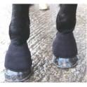 Cloches magnétiques pour cheval